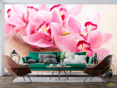 Розовые  Фотообои Орхидея