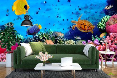 Рыбы и море Фотообои Мир подводный. Красоты.