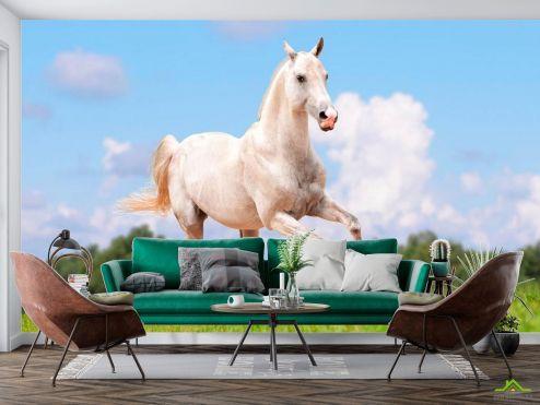 Животные Фотообои Бегущий конь