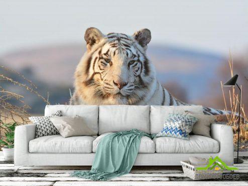 Животные Фотообои белый тигр