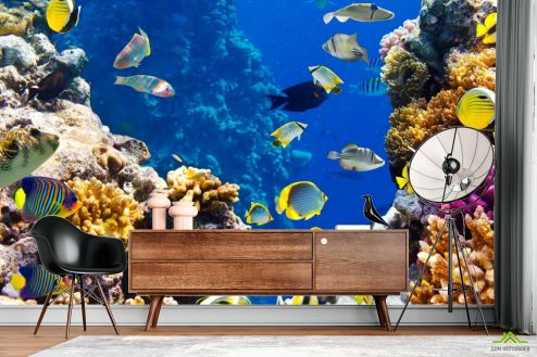 Рыбы и море Фотообои Полосатые рыбки