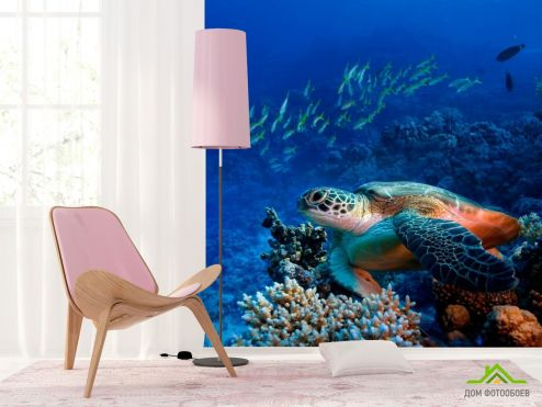 обои Рыбы и море Фотообои Черепаха в глубине