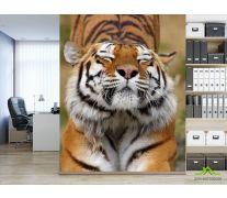 Фотообои тигр потягивается