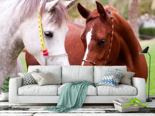 Лошади Фотообои Пара коней