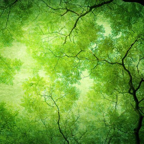 обои на потолок Фотообои Вид на дерево снизу