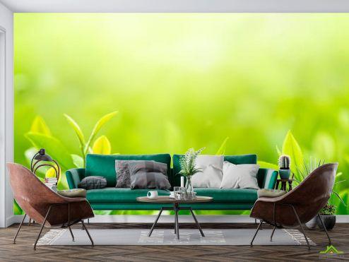 Фотообои Природа по выгодной цене Фотообои зеленые росточки