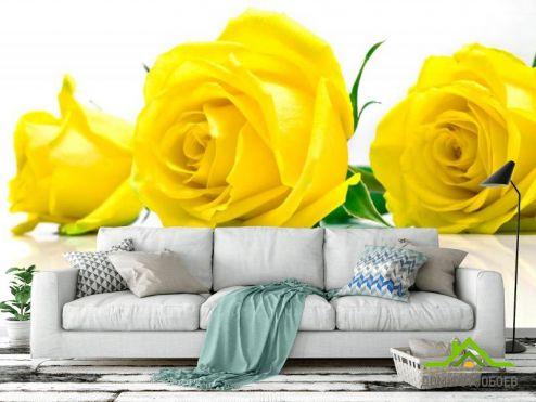 обои Розы Фотообои Розы желтые