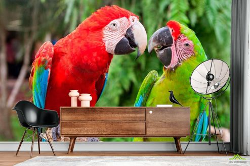 Птицы  Фотообои Общение попугаев