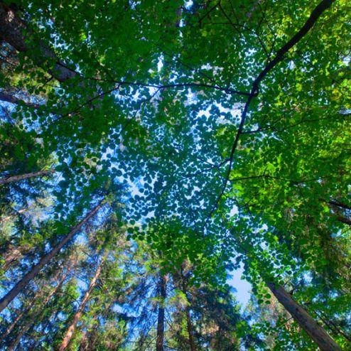 обои на потолок Фотообои деревья для потолка