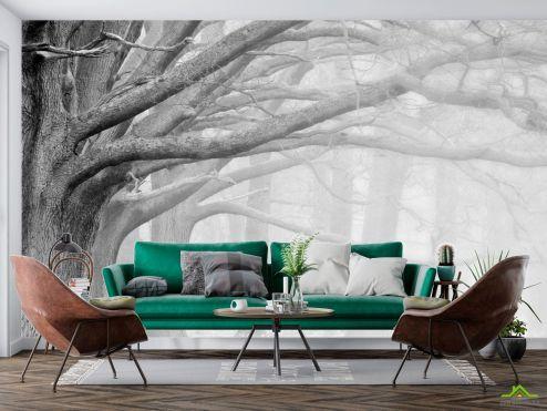 Природа Фотообои большие серые деревья