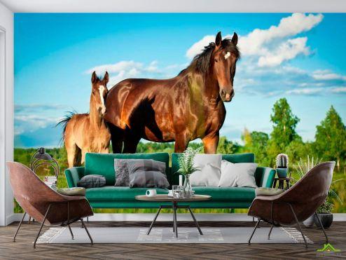 Животные Фотообои Лошадь с жеребенком