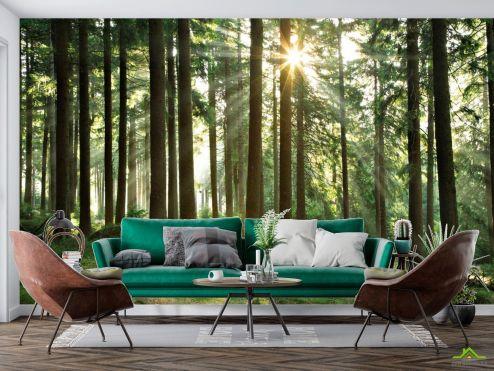 Природа Фотообои лес со стройными деревьями
