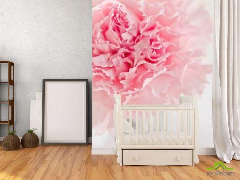 обои Цветы Фотообои Пион бледно-розовый