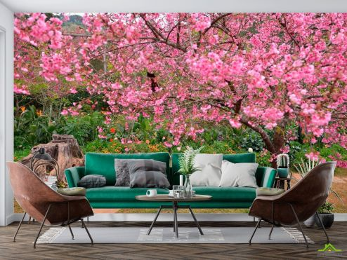 Природа Фотообои Цветущие вишни