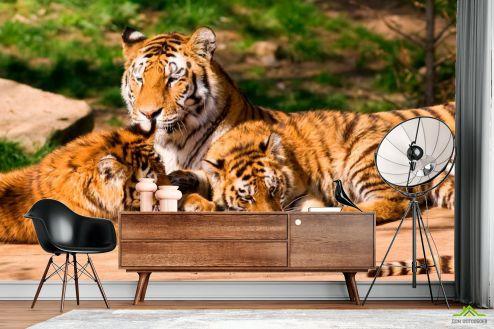 Тигры Фотообои Семья тигров купить