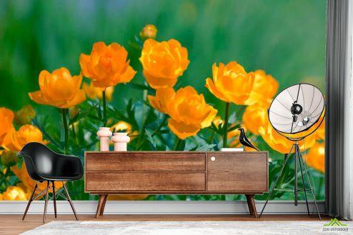 Кувшинки Фотообои Желтые кувшинки
