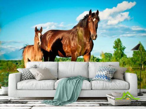обои Лошади Фотообои Лошадь с жеребенком