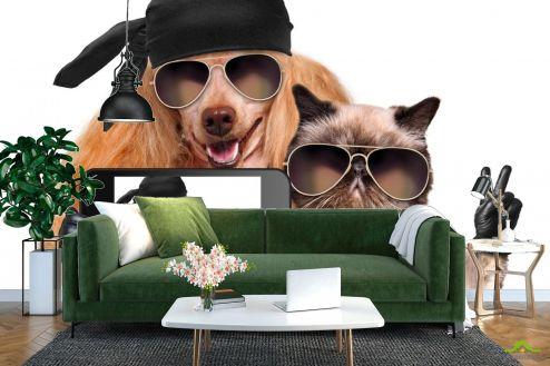 Коты Фотообои кот с собакой делают селфи
