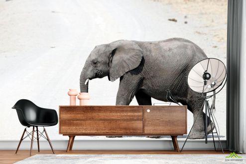 Слоны Фотообои Слон в пустыне