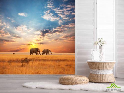 обои Слоны Фотообои Слоны на закате