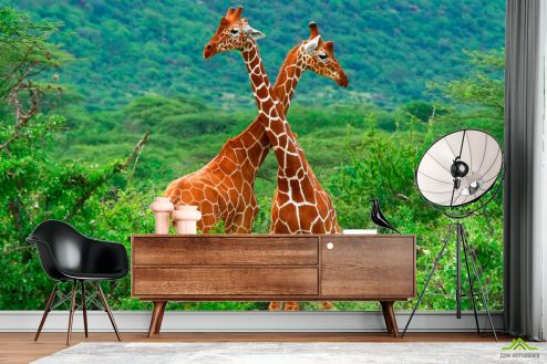 Жирафы Фотообои Дружба жирафов