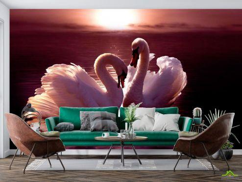 Животные Фотообои Лебеди