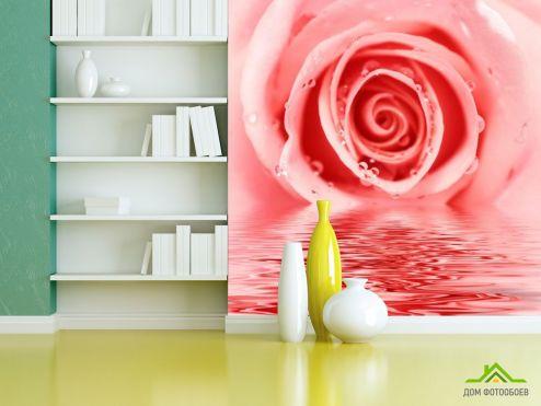 обои Цветы Фотообои Роза нежного оттенка