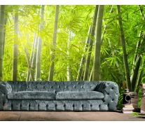 Фотообои бамбуковый лес