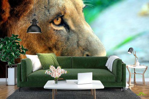 Львы Фотообои Лев