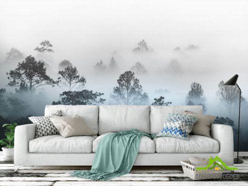 Природа Фотообои Туманные деревья