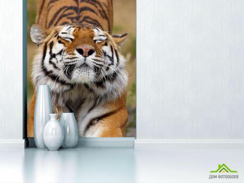 обои Животные Фотообои тигр потягивается