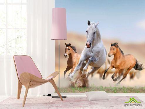 Лошади Фотообои Игры лошадей