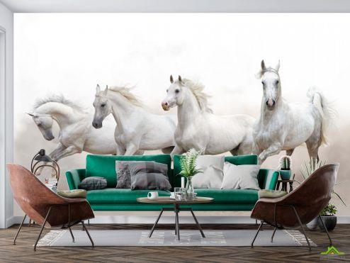 Фотошпалери Тварини Фотошпалери чотири білі коні