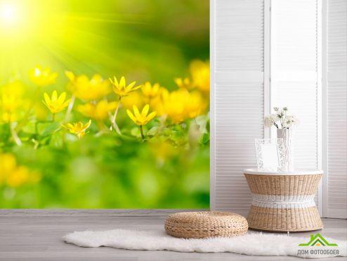 Фотообои Подснежники по выгодной цене Фотообои Пролиски желтые
