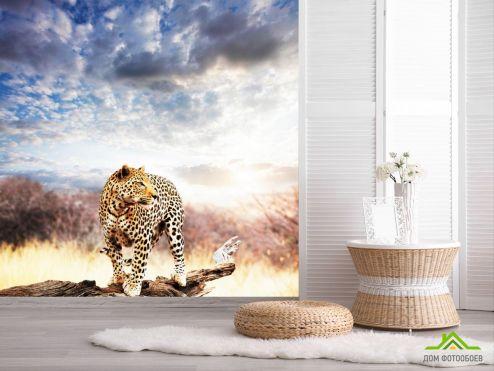 обои Гепарды Фотообои Гепард на коряге