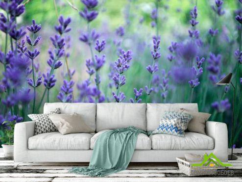 обои Цветы Фотообои Синяя лаванда