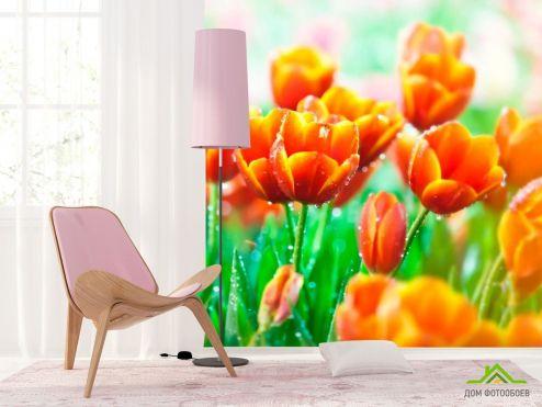Тюльпаны Фотообои Красно-желтые тюльпаны