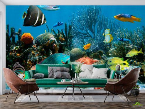 Рыбы и море Фотообои Морские рыбы