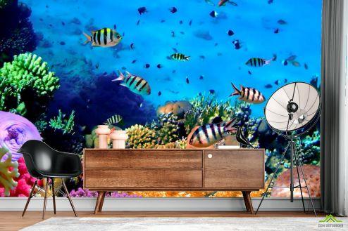 Рыбы и море Фотообои Подводный мир. Красоты.