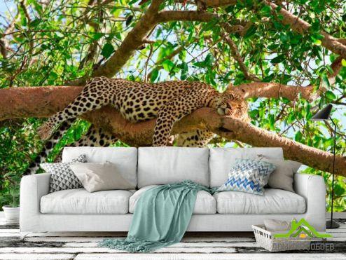 обои Гепарды Фотообои Спящий гепард