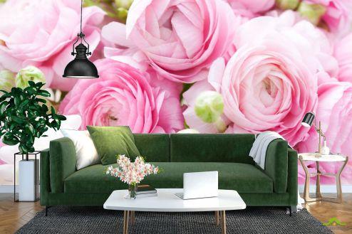 Цветы Фотообои Розовые рунункулюсы