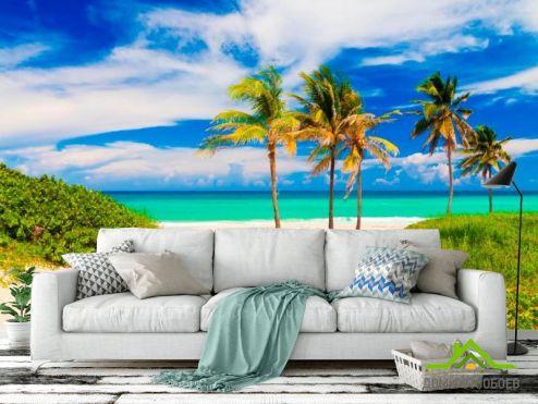 Пальмы Фотообои Пальмы на море купить