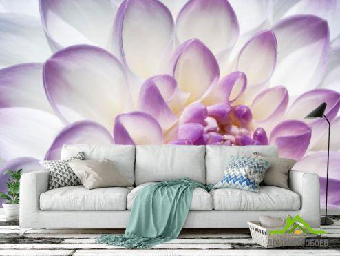 обои Цветы Фотообои Лепестки пиона бело-фиолетовые