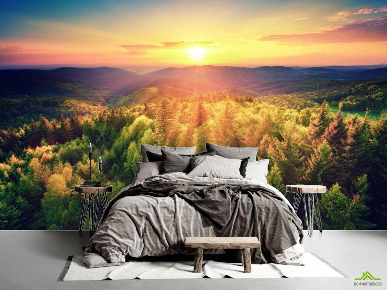 Фотообои закат над сосновым лесом