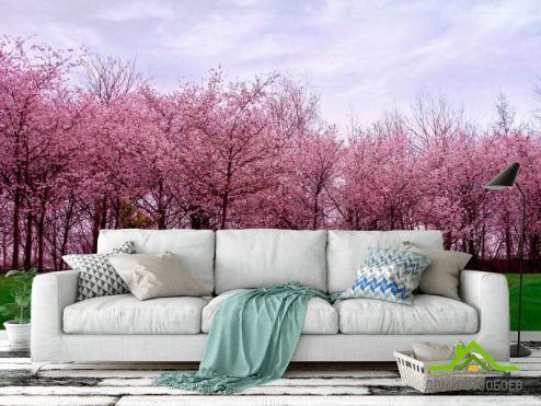 Розовые деревья Фотообои Цветущие вишни