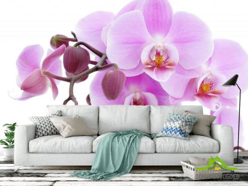 обои Орхидеи Фотообои сиреневая орхидея