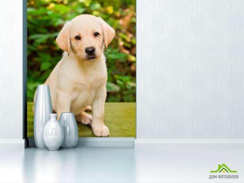 Собаки Фотообои Милый щенок