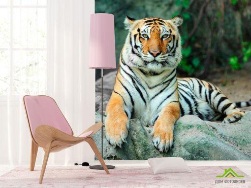 обои Тигры Фотообои Отдыхающий тигр