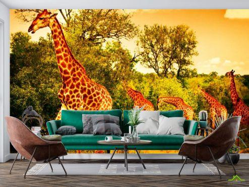 Животные Фотообои Жирафы на пастбище