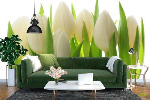 Тюльпаны Фотообои белые тюльпаны
